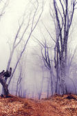 Fantastic dark forest with fog — Stock Photo