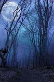 Noche oscura selva agaist luna llena — Foto de Stock