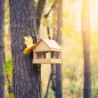 Starling house on tree in autumn park — Stock Photo