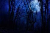Dark night forest agaist full moon — Stock Photo
