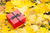 Red gift box with bow in yellow leaves — Stock Photo