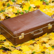 Vintage suitcase in autumn park — Stock Photo