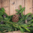 Christmas tree branches with bumps  — Stock Photo