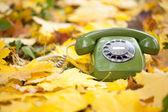 Zelené vinobraní telefon v žluté listy — Stock fotografie