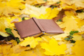Opened book laying in yellow leaves — Stock Photo