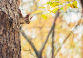 Squirrel in autumn park — Stock Photo