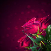 Beautiful red roses — Stockfoto