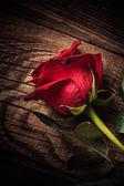 ένα κόκκινο τριαντάφυλλο — Φωτογραφία Αρχείου