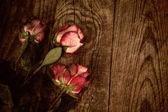 Güzel kırmızı gül buketi — Stok fotoğraf