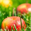 Fresh apples — Stock Photo #47328687