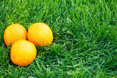 Fresh oranges — Foto Stock