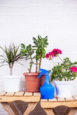 Flowers in pots — Stock Photo