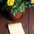 Yellow roses in pot and old notebook — Stock Photo