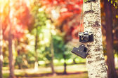 Camera hanging on a tree — Stock Photo