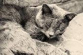 Katt liggande — Stockfoto
