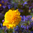 Yellow flower in the foreground under natural conditions. — Stock Photo #14308349