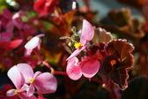 Biene sitzend auf der blüte — Stockfoto