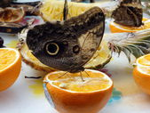 Butterfly sitting on orange — Stock Photo