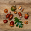 Autumn background with acorns and leaf — Stock Photo