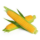 Corn ear isolated on white — Foto de Stock