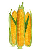 Corn ear isolated on white — Stock Photo