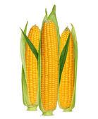 Oreja de maíz aislado en blanco — Foto de Stock
