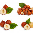Filbert nut set isolated on white background — Stock Photo