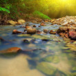 Tropical river in jungle — Stock Photo