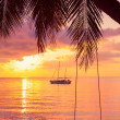 Rope swing on tropical palm during sunset — Stock Photo
