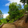 Tropical park pathway — Stock Photo