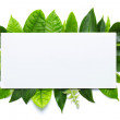 Fresh green leaves isolated on white background with blank place for text — Stock Photo