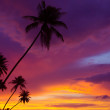 Sunset over the ocean with tropical palm trees silhouette, vertical panorama — Stock Photo #27196497