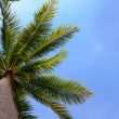 Palm tree over blue sky with copy space — Stock Photo