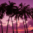 Tropical sunset with palm trees silhouette, Thailand — Stock Photo #27196841