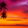 Two palm trees silhouette on sunset tropical beach — Stockfoto