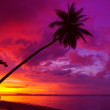 Sunset palm tree silhouette over ocean — Stock Photo