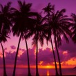 Stockfoto: Palm trees silhouette at sunset on tropical island, Thailand