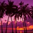 silueta de los árboles de Palma al atardecer en la isla tropical, Tailandia — Foto de Stock
