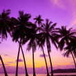 Tropical sunset over sea with palm trees, Thailand — Stock Photo