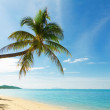 Tropical beach with coconut palm trees — Stock Photo