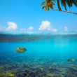 Tropical underwater shot splitted with surface, coconut tree and sky — Stock Photo