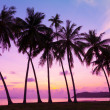 Tropical sunset over sea with palm trees, Thailand — Stock Photo #27197429