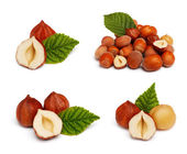 Filbert nut set isolated on white background — Stock Photo