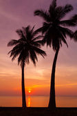 Beautiful tropical sunset with palm trees silhoette — Stock Photo