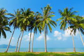 Palm tress on sea shore, Thailand — Stock Photo
