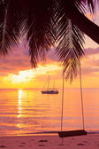 Rope swing on tropical palm during sunset — Foto de Stock