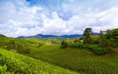 Mountain tea plantation at Cameron Highlands, Malaysia — Stock Photo
