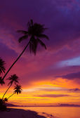 Sunset over the ocean with tropical palm trees silhouette, vertical panorama — Stock Photo