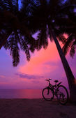 Tropical sunset with palm trees and bicycle on the beach, vertical panorama — Stock Photo