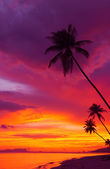 Sunset over the ocean with tropical palm trees silhouette vertical panorama — Stock Photo
